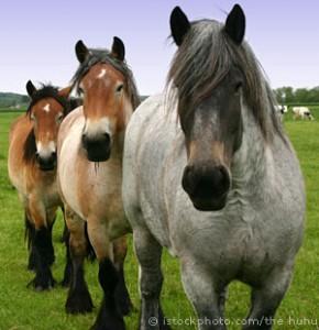 Horses_000000645200Small
