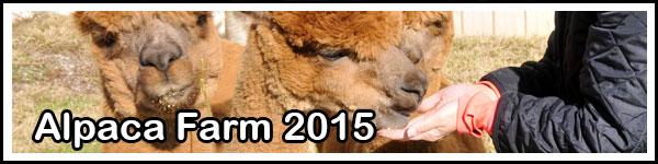 Alpaca-Farm-2015